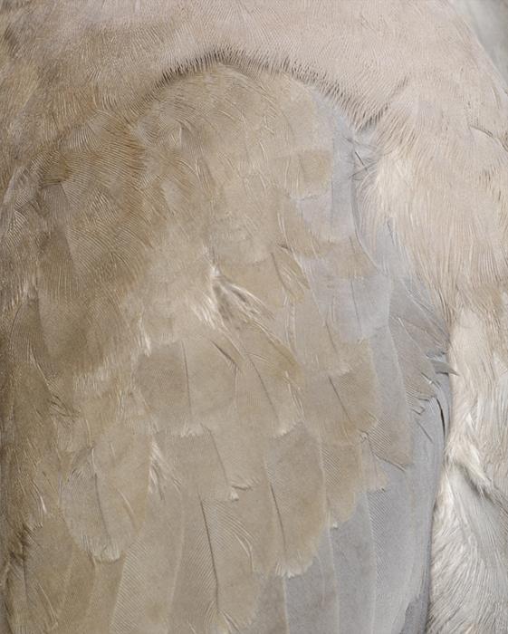 Columbidae I, 2011